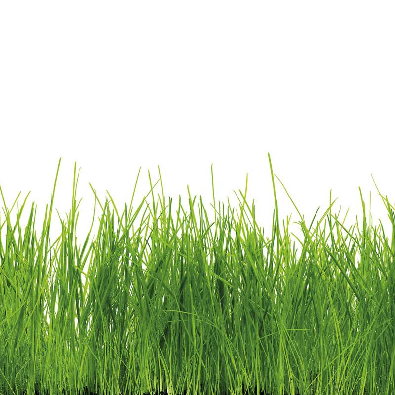 Gras 1 - Kuchenruckwand glas gras ...