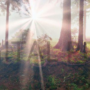 Glas Motiv Wald im Sonnenlicht